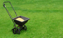How to Grow a Lawn