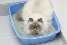 5 Causes of Litter Box Problems in Cats
