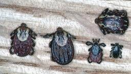 Getting a Grip on Lyme Disease