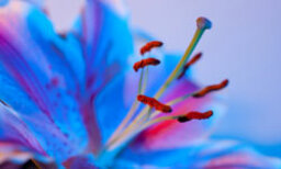 5 Macro Photography Tips