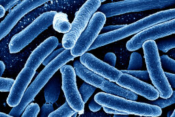 Can we use microbes to fight disease?