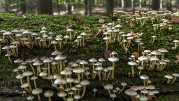 Can Mushrooms Actually Help Save the Planet?