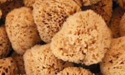 Quick Tips: Natural Sea Sponges and Your Skin