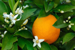 How does neroli work in skin cleansers?