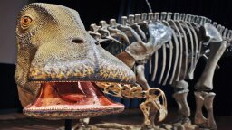 Nigersaurus: The 'Mesozoic Cow' With More Than 500 Teeth