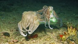 Fascinating Discovery Reveals How Cephalopod Eyes Detect Color
