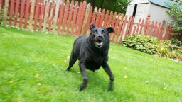 There's a Name for When Your Dog Zooms Around Like a Joy-crazed Maniac