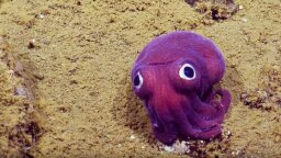 6 Haikus and 3 Limericks About This Googly-eyed Squid