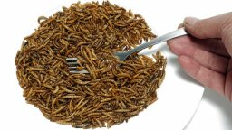 We Have Italian, Blue Cheese, Ranch … Roach? Insect Oil's Rich in Omega-3 Acids!