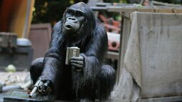 Should We Worry About Apes Learning to Use Hanguns?