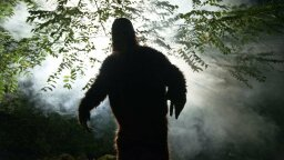 People Are on the Hunt for Bigfoot. Here's How They're Funding It