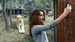 7 Animals You Should Never Take Selfies With