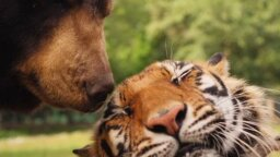 9 Times Interspecies Friendship Worked Out OK