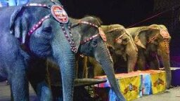 Ringling Bros. Retiring Elephants Early. PETA Still Not Smiling