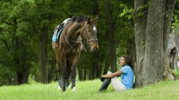 Horses Can Be Taught to Communicate With Us Using Symbols