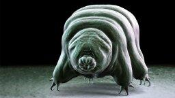 5 Reasons Tardigrades Will Outlast Us All