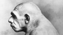 Early Humans Mated With Inbred Neanderthals — at a Cost