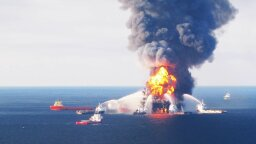 Deepwater Horizon Oil Found in Land-based Birds for First Time