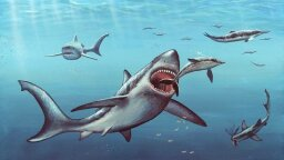 New Clues to Why Bus-sized Giant Shark Megalodon Went Extinct