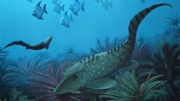 Ancient Little Fishies Clue Us In to Why Tiny Animals Survive Extinction Events