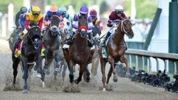 Swarm Intelligence Correctly Predicts Top Four Kentucky Derby Finishers
