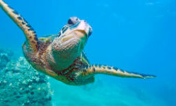 The Ultimate Ocean and Marine Life Quiz