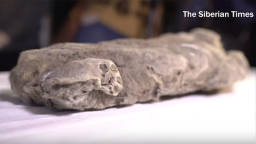 Perfectly Preserved Prehistoric Lion Cub Found in Russian Permafrost
