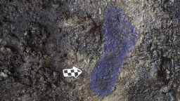 13,000-year-old Footprints Found in British Columbia