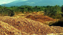 Wasted Orange Peels Turn Barren Landscape Into Dense Forest