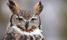 The Ultimate Owl Quiz