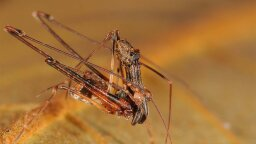 It's a Bird! It's a Spider! It's Pelican Spider!