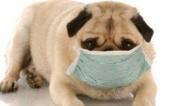 Quiz: Do you have pet allergies?