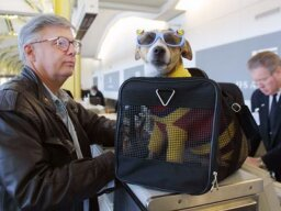 How do airlines determine how expensive a pet plane ticket is?