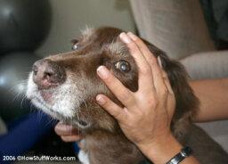 How Pet Psychics Work