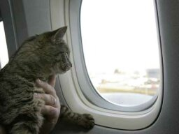 Where exactly do they store pets on a plane?