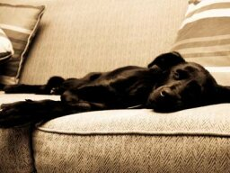 Do pets suffer jet lag?