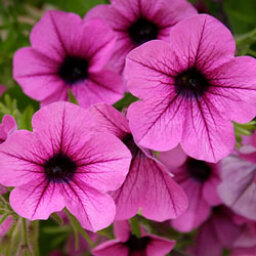 Top 5 Annuals for the South