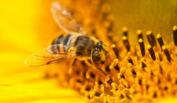 Stuff You Should Know: How Pollen Works [AUDIO PODCAST]