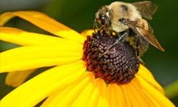 Know Your Pollen Trigger Season