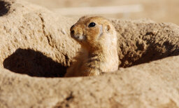 Can I catch plague from a prairie dog?