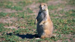 Why You Should Totally Dig Prairie Dogs