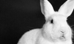 The Ultimate Rabbits and Hares Quiz