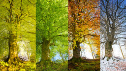 As Earth's Climate Changes, Is It Time to Redefine the Four Seasons?