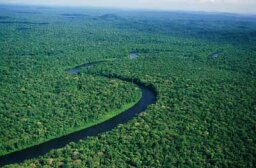 Can we replant the planet's rainforests?