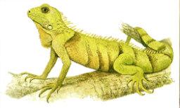 How to Identify Reptiles