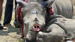 DNA Database Helps Nab Rhinoceros Poachers