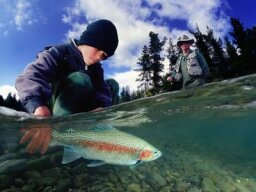 How River Trout Fishing Works