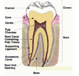 Cavities and Fillings 101