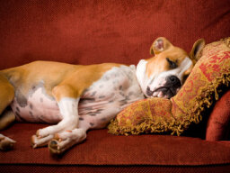 10 Rules for Houseguests with Pets