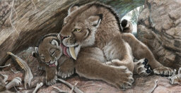 Saber-tooth Kittens Were Big-boned